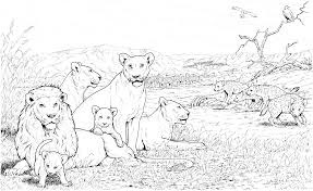 Free Download African Lion Coloring Sheet Print Online