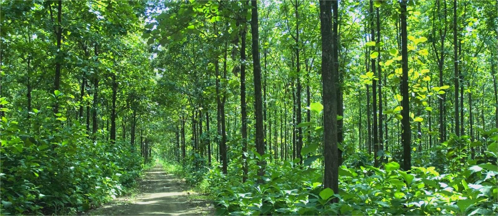 Gambar Hutan Di Kartun