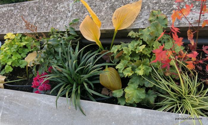 Las 7 mejores plantas de sombra para jardineras Paisaje Libre