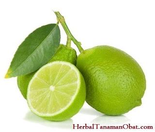Jeruk Nipis (Citrus aurantifolia), jeruk nipis, manfaat jeruk nipis untuk obat batuk, manfaat jeruk nipis untuk kecantikan, manfaat jeruk nipis untuk rambut rontok, manfaat jeruk nipis untuk kesehatan dan kecantikan, manfaat jeruk nipis untuk diet sehat alami