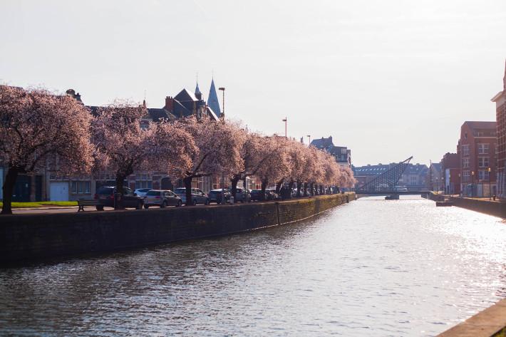 Dendermonde spring blossoms