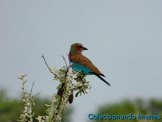 Pájaro en Etosha