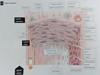 Gambar Jaringan Dasar Tubuh Dan Jaringan Penutup Pada Tubuh