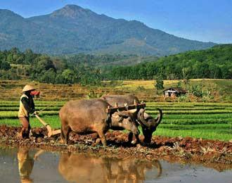 saung ayam hias bogor: Potret Kehidupan di Desa