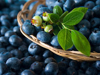 Beginilah Cara Jitu Budidaya Buah Blueberry, Agar Hasil Lebih Melimpah