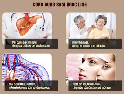 Công dụng của sâm Ngọc Linh cải thiện hiệu quả nhiều chứng bệnh