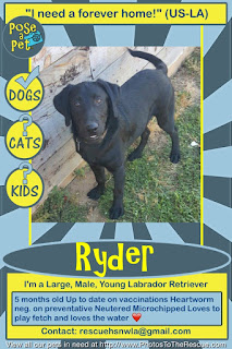 Adopt Ryder flyer from Pose-A-Pet