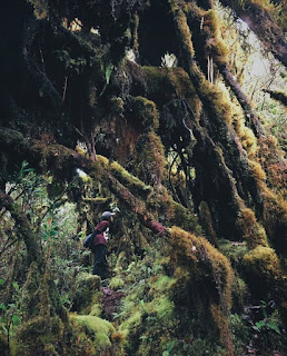 padang-lumut-bukit-raya-2278-mdpl