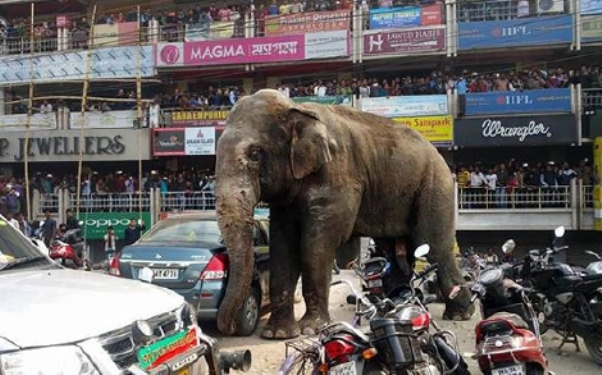 Gajah Sesat Mengamuk Rempuh Rumah Dan Kereta