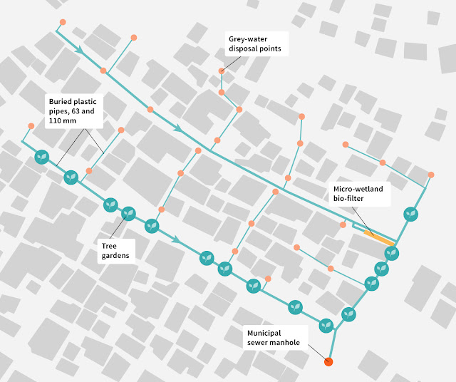 Figure Attribute: Conceptual drawing of the network of buried plastic pipes linking grey-water inputs to tree gardens in Langrug, with the microwetland for further treatment. The informal settlement also has water mains to deliver water to some houses and a separate sewage line, not shown here. Illustration: Elsa Wikander/Azote.