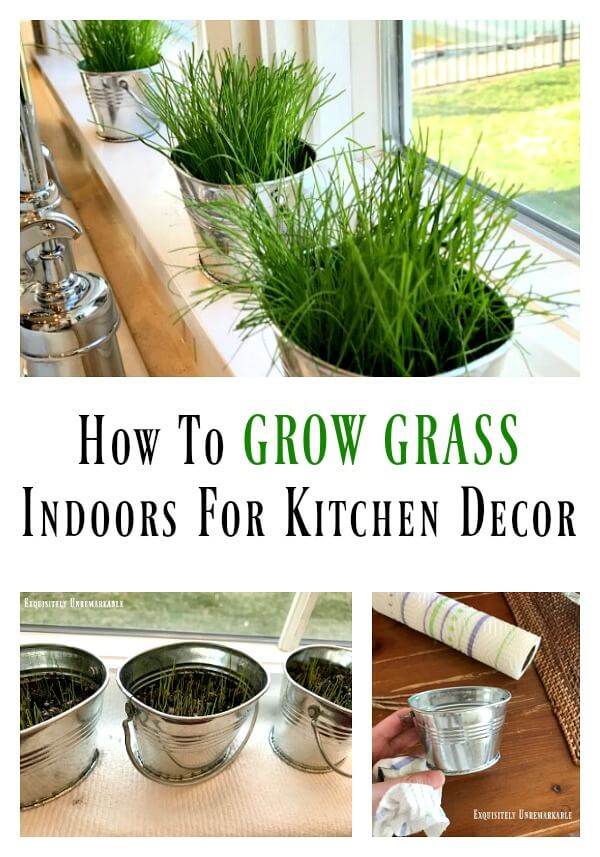 How To Grow Grass Inside For Kitchen Decor