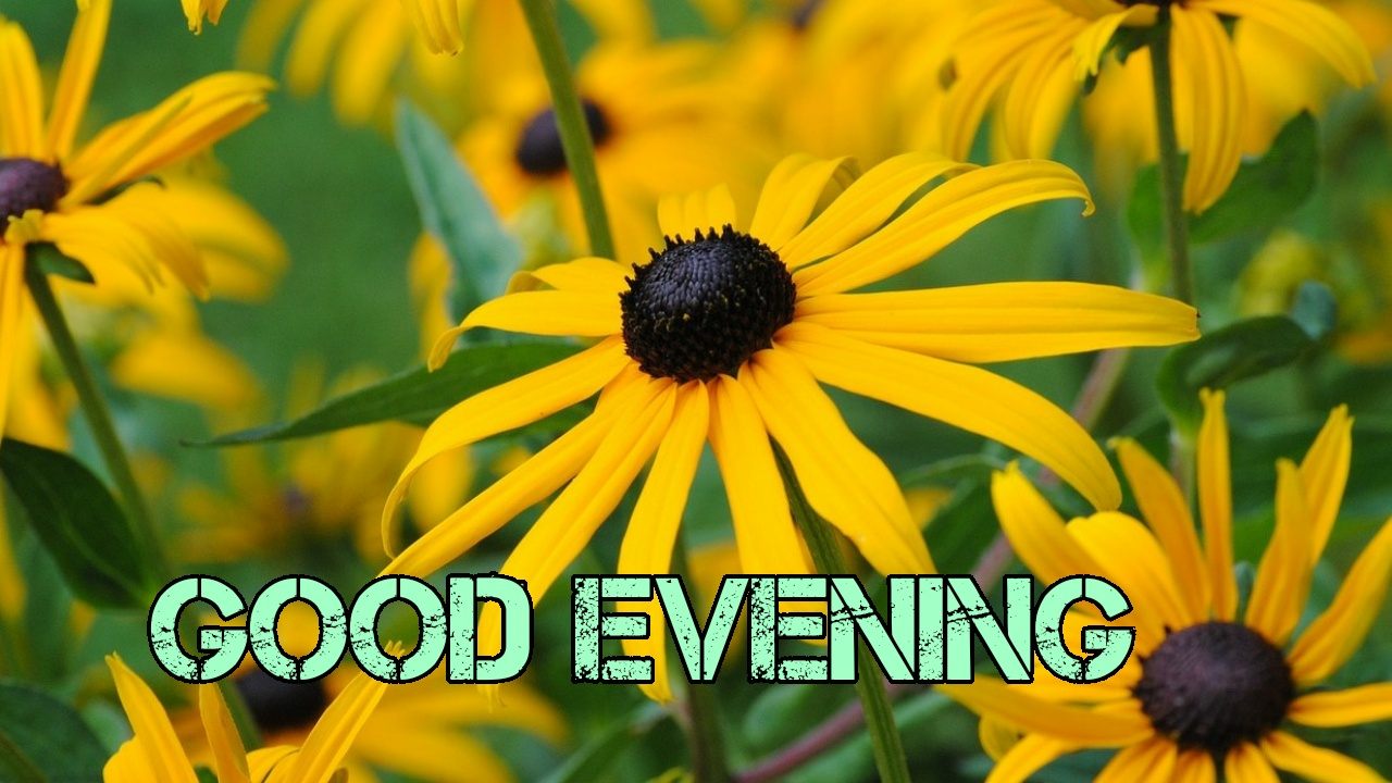 image good evening