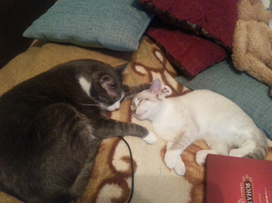 Две кошки спящие на кровати