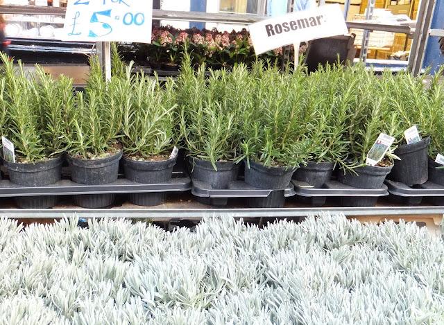 Aromaticas, Columbia Road,Flower Market, Londres, London, Mercado de Flores, Blog de Viajes, Travel Blogger, Elisa N