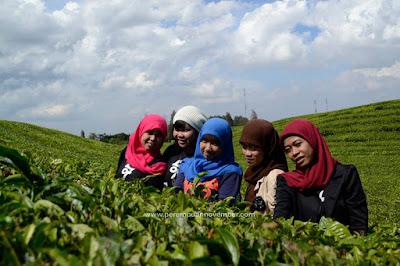 kebun teh siantar wisata sumut