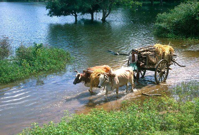Old Sri Lanka Photo Collection