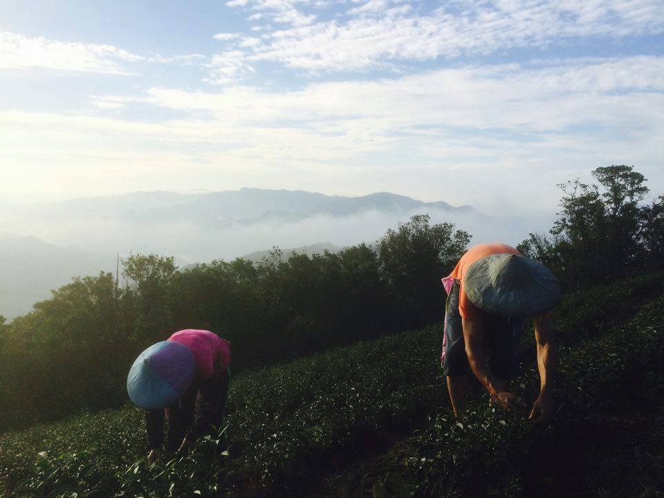 專題訪問|新型態農創的創業旅程 — 鮮乳坊・藍鵲茶・土生土長