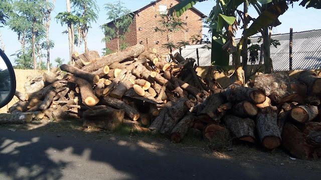 Kehabisan Bahan Omprongan, Petani Tembakau Diduga Gunakan Kayu Hasil Illegal Logging