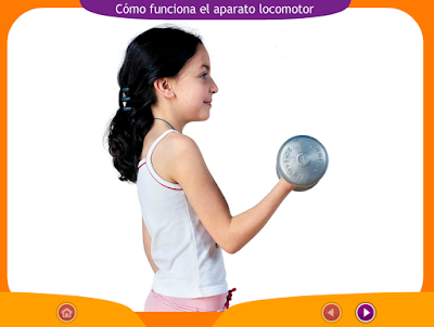 http://ceiploreto.es/sugerencias/juegos_educativos_6/2/1_Como_funciona_ap_locomotor/index.html