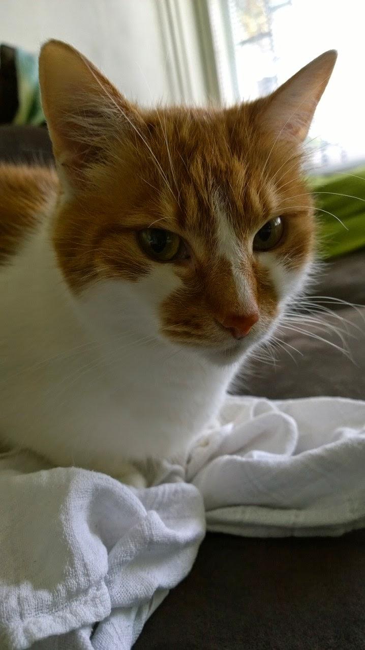 Kissan Värinäkö