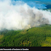 In pictures: Fighting the Swedish wildfires