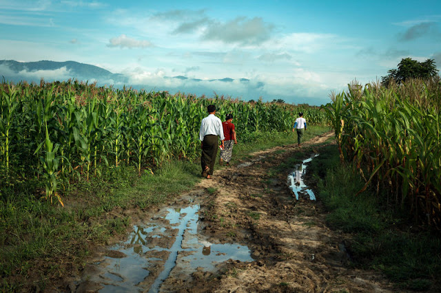 Image Attribute: Farmers walk in their farm outside Yebu village in Shwenyaung township, Shan state, Myanmar in this still image taken from a August 25, 2016 video. REUTERS/Wa Lone
