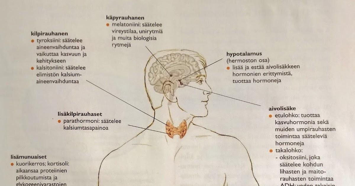 aivolisäkkeen etulohkon toiminta