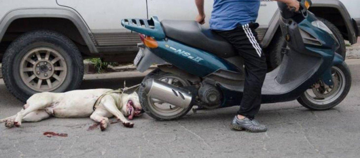 52e23a15a90 Σοκ στην Ηλεία: Έσερνε με μοτοσικλέτα έναν σκύλο - TooCute
