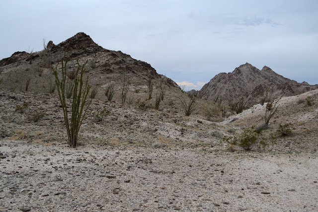 flat with ocotillo