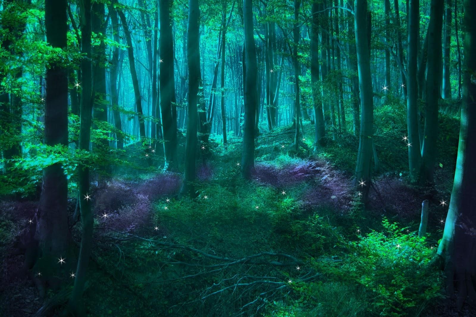 Risultati immagini per enchanted forest