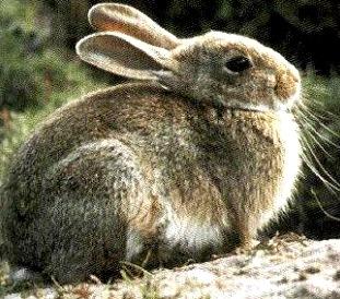 Foto de conejo de perfil
