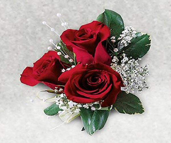 Wallpaper: Lovely Red Rose Wallpapers