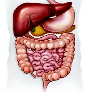 what is Gastroenterology ?