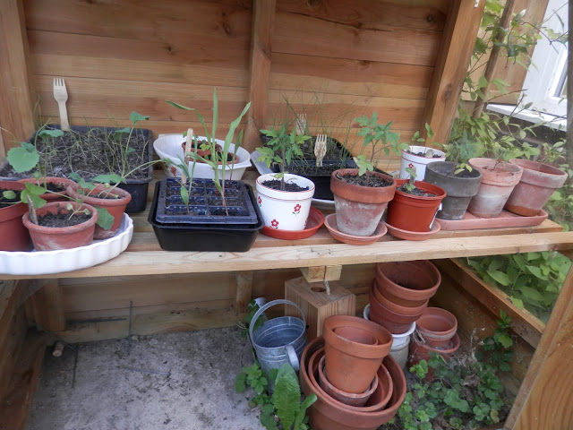 Diary of a Permaculture(ish) garden, April and May 2018. By UK garden blogger secondhandsusie.blogspot.com #ukgarden #suburbangarden #suburbanpermaculture #permaculturegarden #organicgarden #gardenblogger