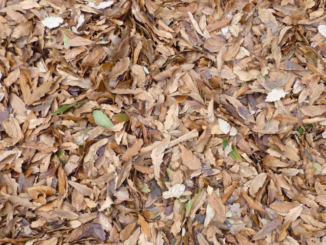 Carpet of fallen leaves at Kew Gardens