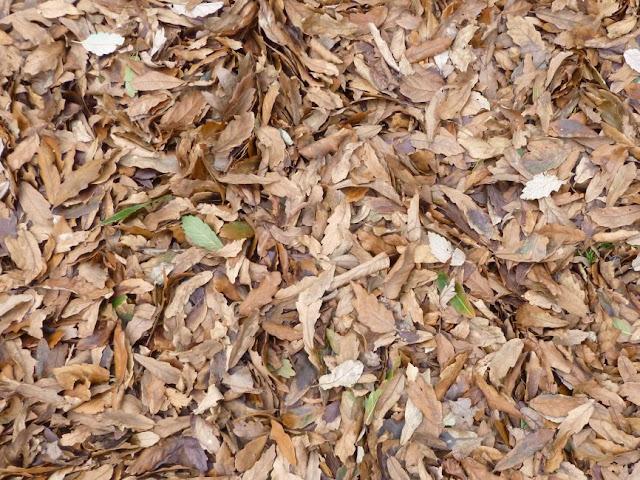 Carpet of fallen leaves at Kew Gardens