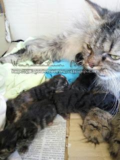 Parsi lahir anak empat