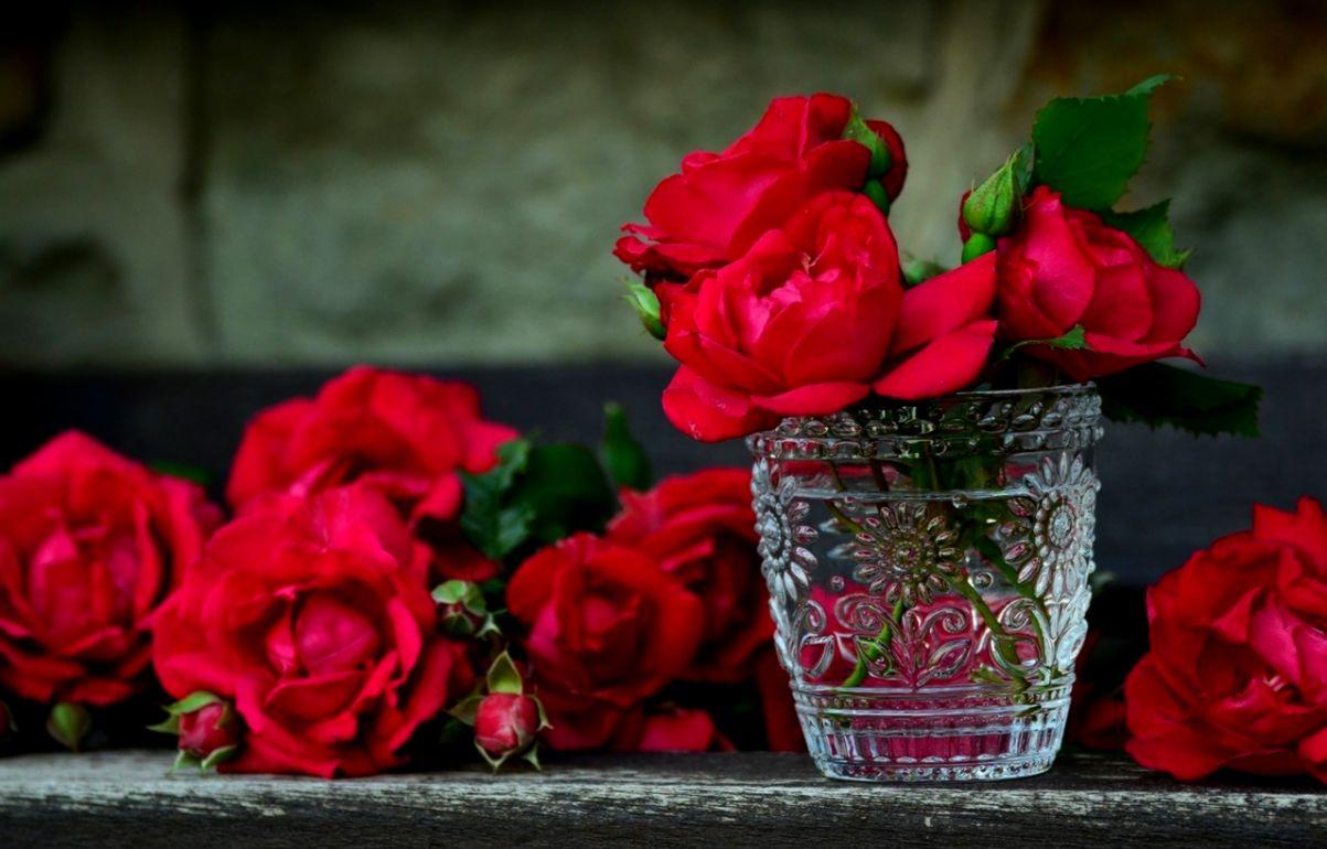 Rose Nature Wallpaper Hd 3d