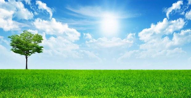 Ingin Memiliki Pohon Di Surga? Baca Kalimat Ini