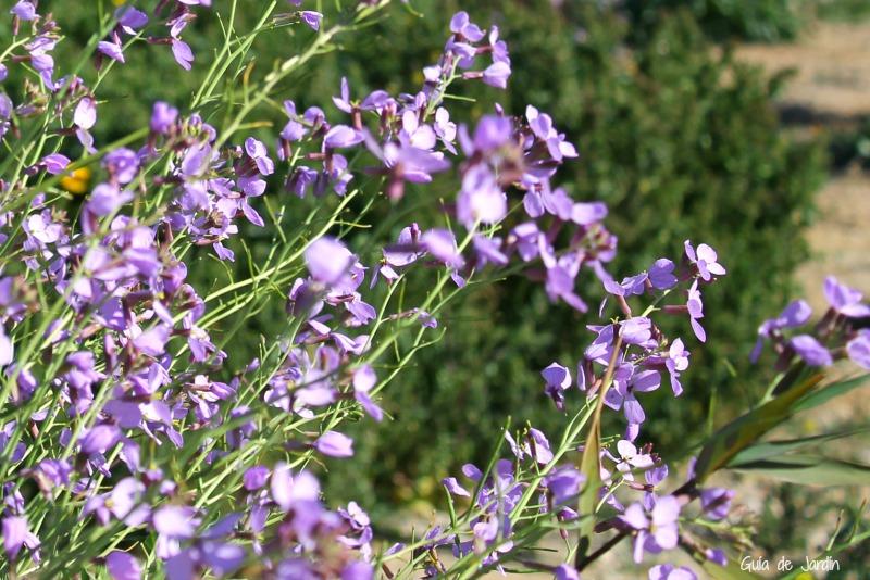Tallos repletos de flores silvestres de color lila