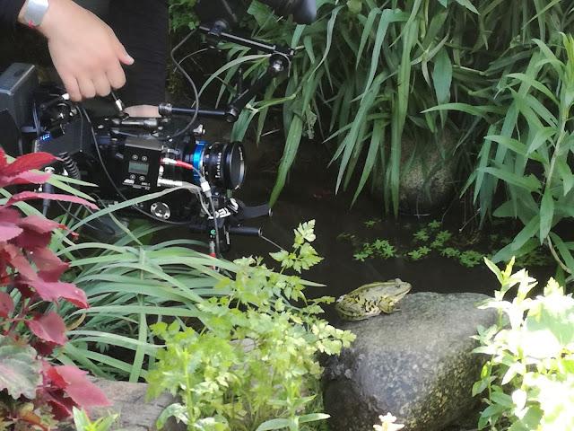 żaba nad strumykiem