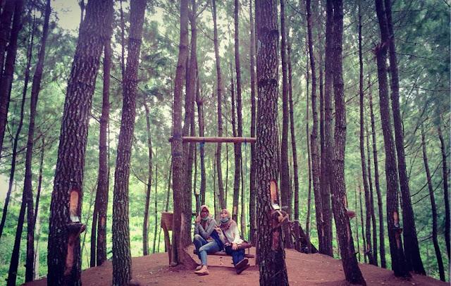 hutan-pinus-kita-tegalombo-pacitan
