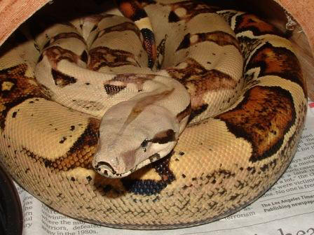 How To Make A Boa Constrictor Cake
