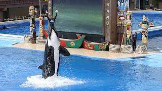 seaworld, killer whale, Kasatka, Kasatka euthanized