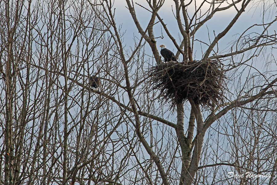 The Eagles Of Wiley Slough