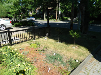 Mount Pleasant West Toronto garden renovation removing lawn before by Paul Jung Gardening Services