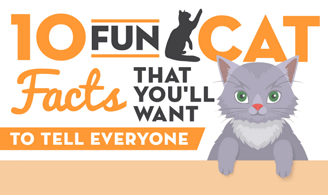 10 Fun Cat Facts That You'll Want to Tell Everyone