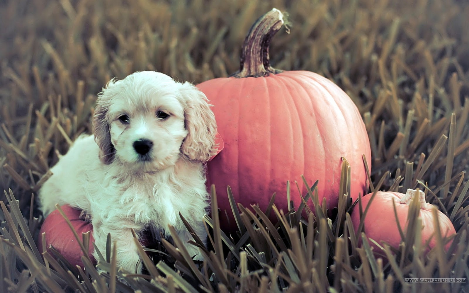 Fall Puppy Wallpaper Cute And Funny Pictures Of Animals 73 Halloween Pictures
