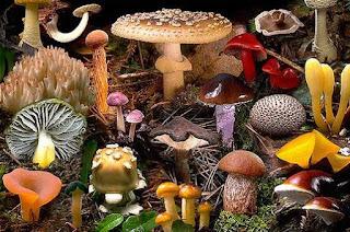 Ciri-ciri Kingdom Fungi dan Contohnya