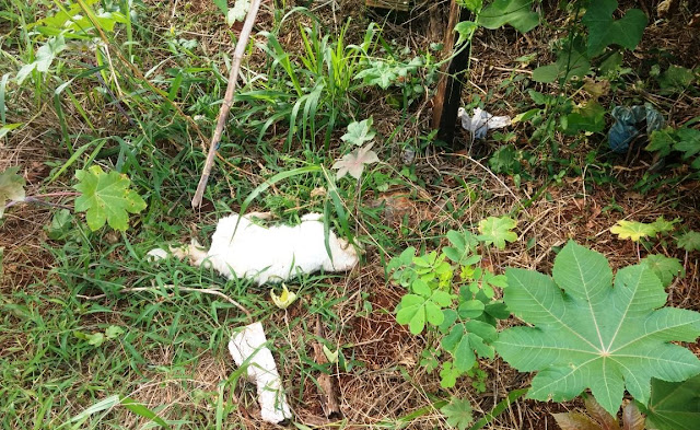 Borrazópolis:Gatos  mortos por envenenamento